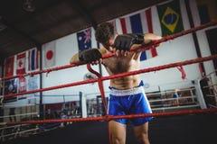 Boxer posing after defeat Royalty Free Stock Photos