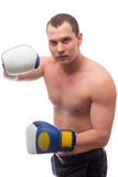Boxer posing with gloves on a white Royalty Free Stock Photo