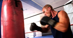 Boxer practicing boxing with punching bag. In fitness studio stock video footage
