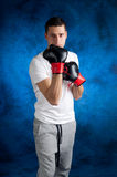 Boxer  protecting itself Stock Image