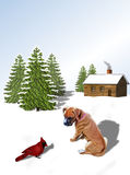 Boxer Pup and Cardinal. Boxer pup and red cardinal bird on snow. Brown log cabin with smoke coming from chimney and  green evergreen trees in background.  Room Royalty Free Stock Photos