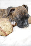 Boxer Puppy Sleeping with Baseball and Bat Royalty Free Stock Photos