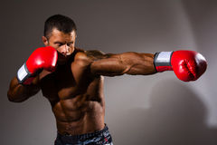 Boxer in rack ready for battle. Athletic man with boxing gloves on a gray background Stock Photography