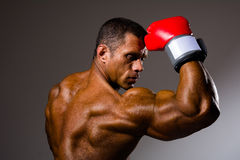 Boxer in rack ready for battle. Athletic man with boxing gloves on a gray background Stock Images