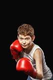 Boxer rack Royalty Free Stock Photo