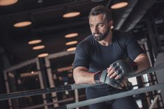 Boxer ready to fight stock images