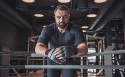 Boxer ready to fight. Attractive muscular boxer in boxing gloves is leaning on boxing ring and looking at camera while training in gym royalty free stock images