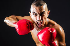 Boxer with red gloves Stock Image