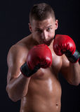 Boxer with red gloves Stock Images