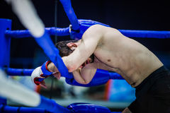 Boxer on ropes of ring royalty free stock images