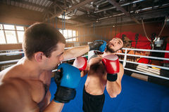 Boxer sents his opponent to the knockout. Royalty Free Stock Photography