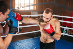 Boxer sents his opponent to the knockout. Royalty Free Stock Image
