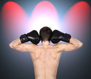 Boxer standing with his back Stock Image