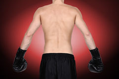 Boxer standing with his back Stock Photography