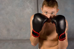 Boxer staring at the camera over his fists Stock Photos