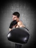 Boxer strikes Stock Photography