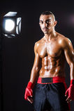 Boxer and studio lights Royalty Free Stock Photography