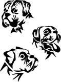 Boxer. Stylized boxer dog - black and white illustration of head Royalty Free Stock Photography