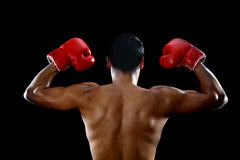 Boxer torso Royalty Free Stock Images