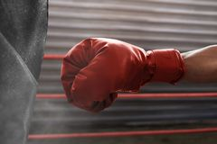Boxer wearing red boxing glove stock photography