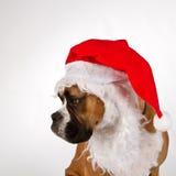 Boxer wearing santa hat. Boxer dog wearing a Santa hat and beard royalty free stock image