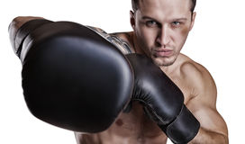 Boxer on white Stock Images