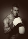Boxer with white gloves Royalty Free Stock Images