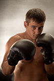 Boxer Stock Photography