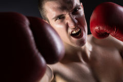 Boxerdurchschlag Stockfotografie