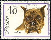 Boxerhund auf einem Weinlesepfostenstempel stockbilder