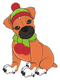 Boxerhund in der warmen Kleidung stock abbildung