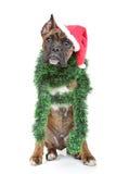 Boxerhund wartet den Feiertag lizenzfreie stockbilder