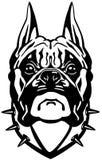Boxerhundekopf Stockfoto