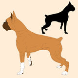 Boxerhundeschwarzschattenbild realistisch Stockfotos