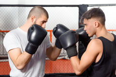 Boxers fight in a sparring Stock Image