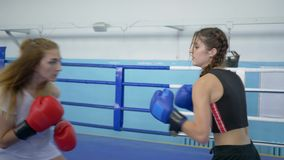 Boxers in gloved training and fighting together on ring in sports club