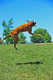 Boxers heads over tails stock photos