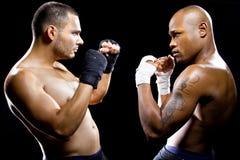 Boxers Posing Stock Photos