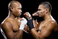 Boxers Posing Royalty Free Stock Image