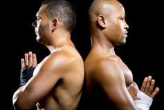 Boxers Posing Stock Image