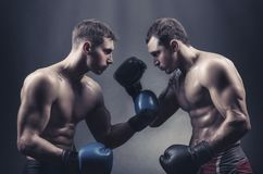 Boxers Stock Images