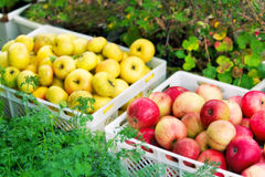 Boxes with apples Royalty Free Stock Images
