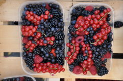 Boxes with berries Stock Photos