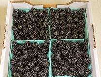 Boxes of Blackberries Royalty Free Stock Image