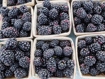 Boxes of Blackberries Royalty Free Stock Photo