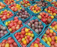 Boxes and boxes of cherry tomatoes stock photos