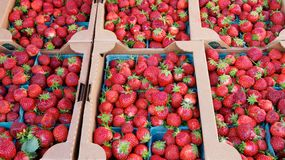 Boxes of Boxes market Strawberries Stock Photos