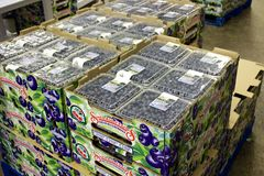 Boxes of British Columbia blueberries ready to be shipped Stock Photo