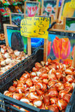 Boxes with bulbs at the Floating flower market in Amsterdam Royalty Free Stock Photo