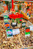 Boxes with bulbs at the Floating flower market in Amsterdam Stock Photos